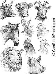 fej, állatok, ábra, tanya, belföldi, rajz, gyűjtés, metszés, vektor, tinta, portré, megtölt rajzóra