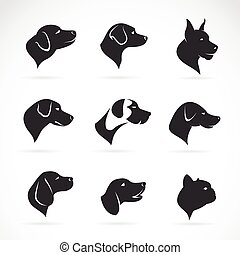 fej, kép, kutya, vektor, háttér, fehér