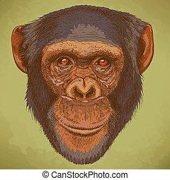 fej, metszés, csimpánz