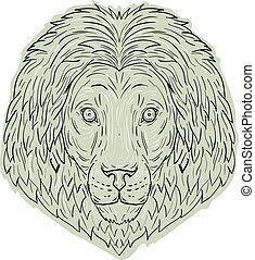 fej, nagy macska, oroszlán, sörény, rajz