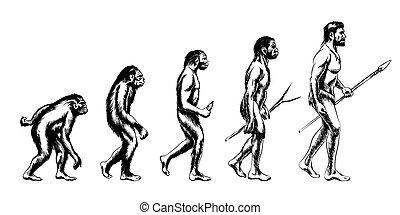 fejlődés, emberi, ábra