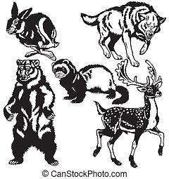 fekete, állhatatos, állatok, fehér