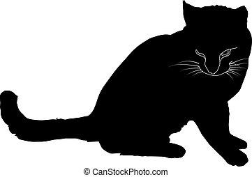 fekete, árnykép, macska