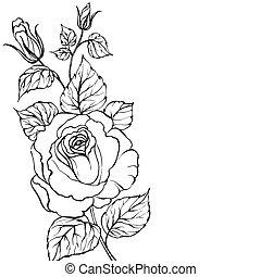 fekete, árnykép, rose.