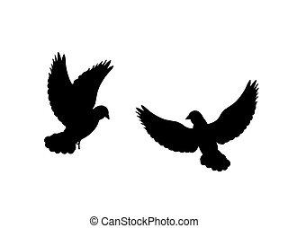 fekete, balek, árnykép, madár, animal.