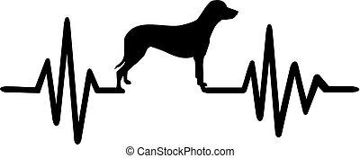 fekete, egyenes, dalmáciai, kutya, szívdobbanás