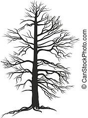 fekete, fa, branchy, gyökér