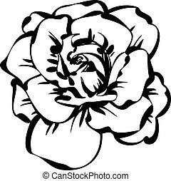 fekete, fehér, skicc, rózsa
