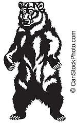fekete, grizzly tart, fehér