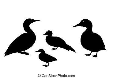 fekete, kacsa, háttér., ábra, árnykép, fehér, vektor