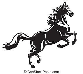 fekete, nevelés, ló, fehér
