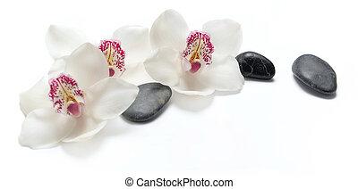 fekete, orhideák, háttér, gyönyörű, elszigetelt, white hegyikristály