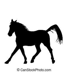 fekete, sillhouette, háttér, ló, elszigetelt, fehér