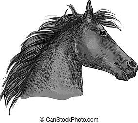 fekete, skicc, versenyló, ló, fej