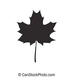fekete, vektor, levél növényen, juharfa, ábra