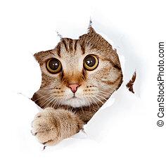 feláll, szakadt, elszigetelt, macska, látszó, dolgozat, kilyukaszt, lejtő