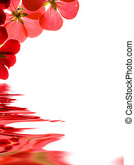 felett, gondolkodás, háttér, white virág, piros