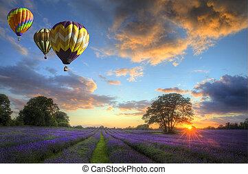 felett, repülés, levendula, levegő, csípős, napnyugta, léggömb, táj