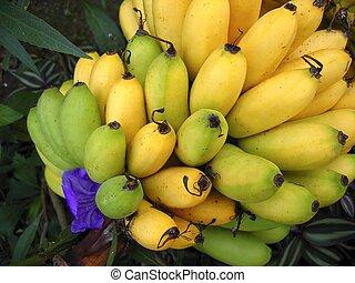 felett, sárga zöld, elágazik, gyümölcs, banán