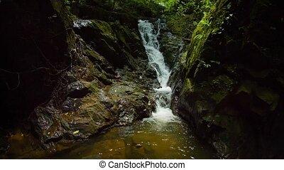"""felett, sound"""", hintáztatni, dzsungel, vízesés, """"natural, mohás"""