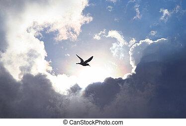 felhő, csillogó, drámai, képződés, jelképes, ad, élet, ég, hope., madár, vályú, fény, háttér., repülés, becsül