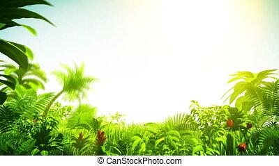 felnövés, esőerdő