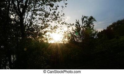felnövés, fa, 4k, napkelte