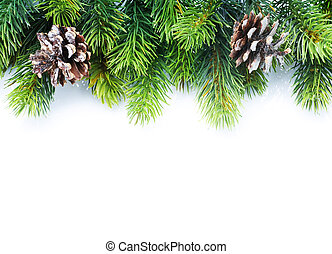 fenyő fa, határ, karácsony