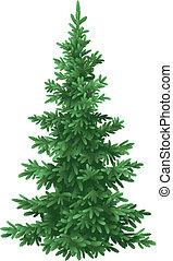 fenyő fa, karácsony, elszigetelt