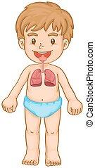 fiú, légzőrendszer, emberi