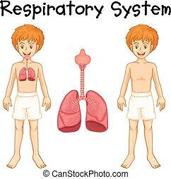 fiú, légzőrendszer