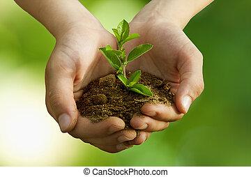 fiú, megőrzés, fa berendezés, környezeti