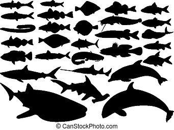 fish, állhatatos, vektor