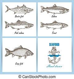 fish, banner., set., temlate, kéz, vektor, húzott, bevésett, tenger gyümölcsei, design.