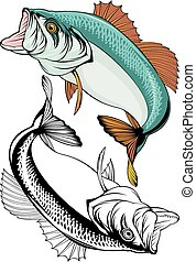 fish, blackback, elszigetelt