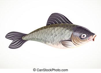fish, háttér, elszigetelt, ponty, fehér