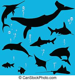 fish, körvonal, tenger