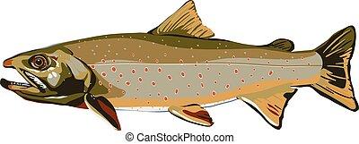 fish, különféle, tavak, nyílik, amerika, észak, pisztráng, stabilizátor, babácska, varden, &, folyók, száj, alapít