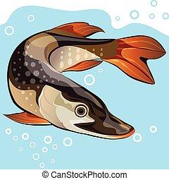 fish, nagy, vektor, csuka, ábra