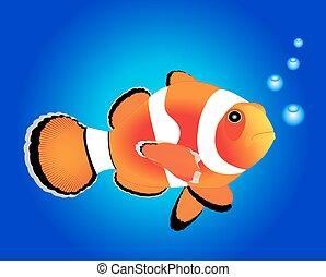 fish, nemo, tenger