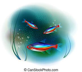 fish, neon, tenger