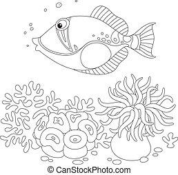 fish, ravasz