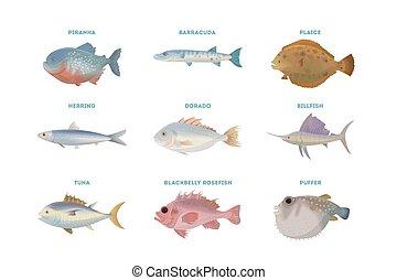 fish, set., tenger
