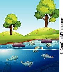 fish, természetes, tó