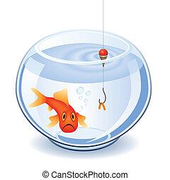 fishbowl, halászat