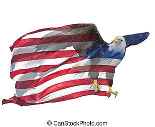 flag., megkettőz, amerikai, kitevés, sas, kopasz