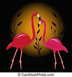 flamingó, két, enamoured