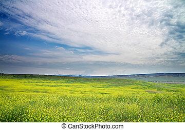 flowers., meadow., táj, sárga terep, eredet, gyönyörű