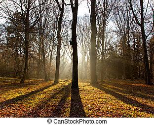 fog., erdő, reggel