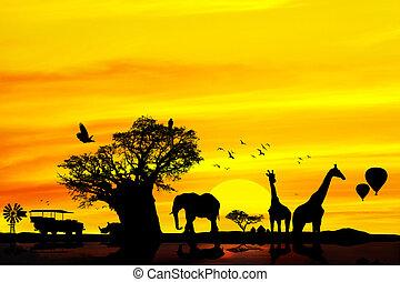 fogalmi, backround., szafari, afrikai